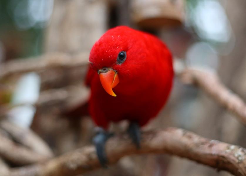 Biotropica: le goûter des perroquets